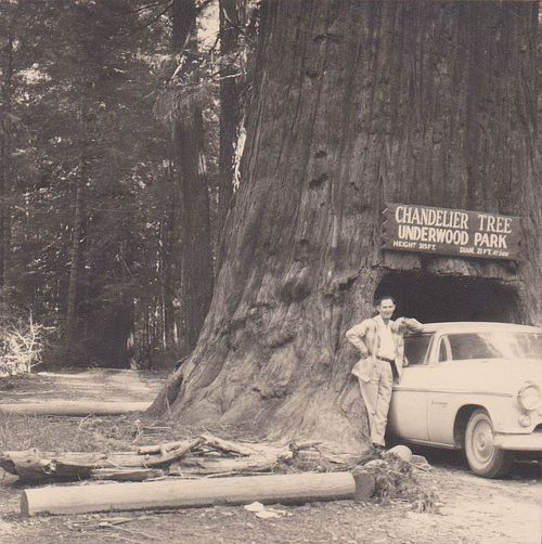 Vintage and Not-So-Vintage Snapshots: Drive-Thru Trees