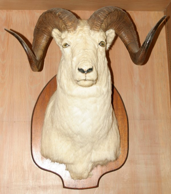 Rams-head.jpg