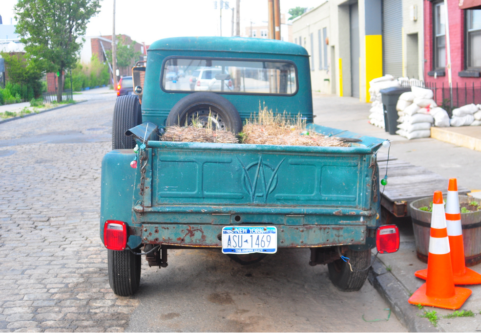 Willys 1953 straw sprouted