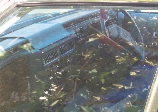1979 Cadillac 5